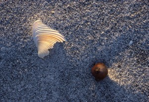 Shell and Acorn