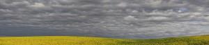 Yellowing Soys; North Dakota