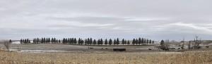 Wind Break; Barn Yard
