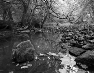 Fall, Muskellunge Creek