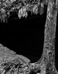 Black Birch, Ferns