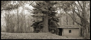 Outbuilding and Pine