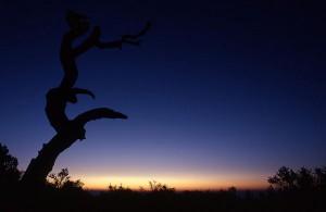 Dawn, Guadalupes