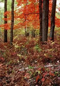 Fall, Mid-Michigan
