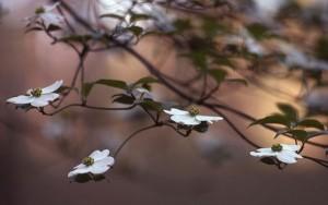 Spring, Alabama